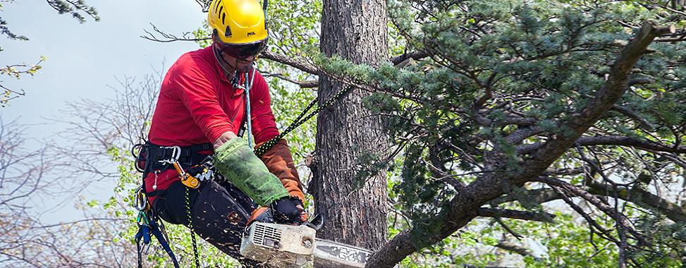 Зрізання та видалення дерев. Херсон.